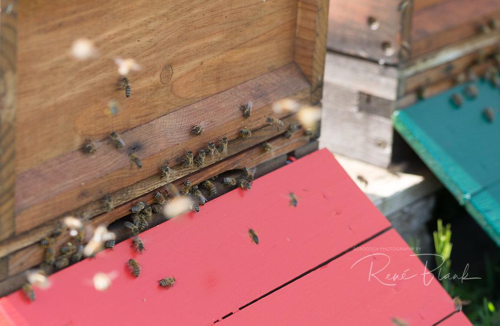 Biensenstock Anflug